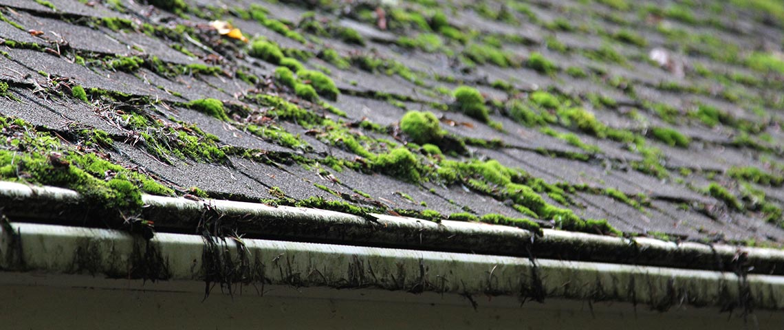 How Does Mold Impact Your Roof?